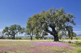 Naturokork verarbeit Kork zu Böden