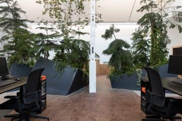 Ein Wald im Büro, von Hydroplant