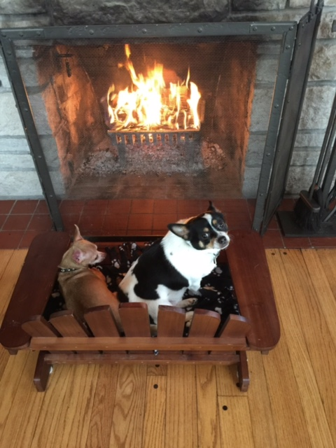 Hygge dogs in front of fireplace