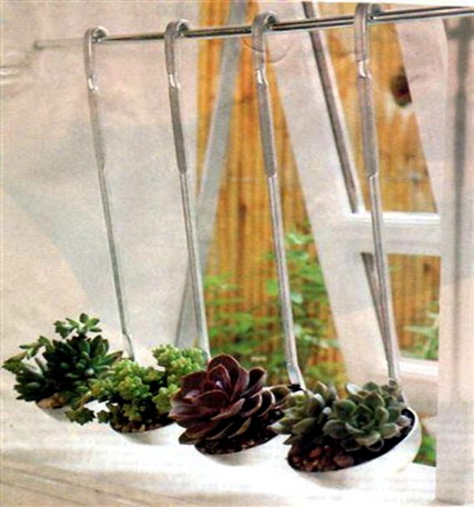 Plants in soup ladles hanging from rod