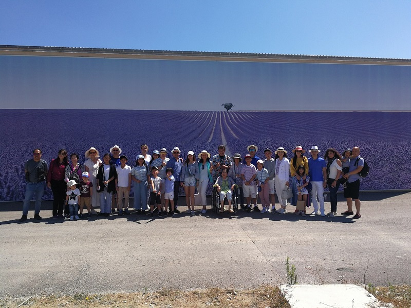Lavender Provence field big group