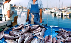 France. Marseille. Fish Market. Yachts. - Booking for Marseille