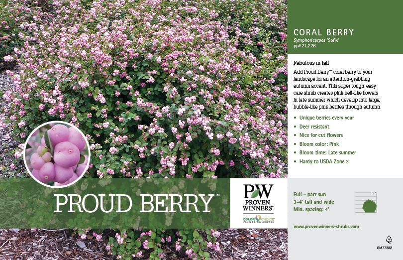 Symphoricarpos Proud Berry Coral Berry 11x7 Quot Variety