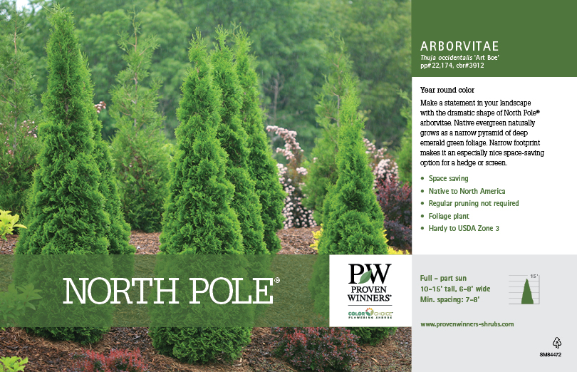 Thuja North Pole 174 Arborvitae 11x7 Quot Variety Benchcard