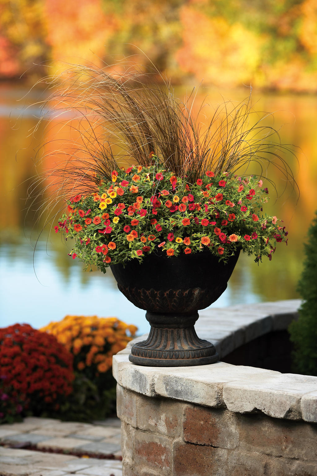 Fall Potted Plants Container Gardening In Fall Proven Winners
