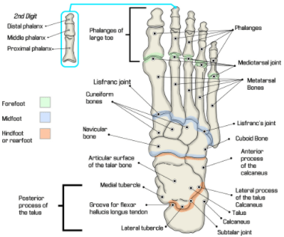 bones in your foot diagram wiring for car audio icd 10 audit target area spotlight on pcs toe amputations if the amputation involves metatarsal then it should be coded as a partial ray detachment of