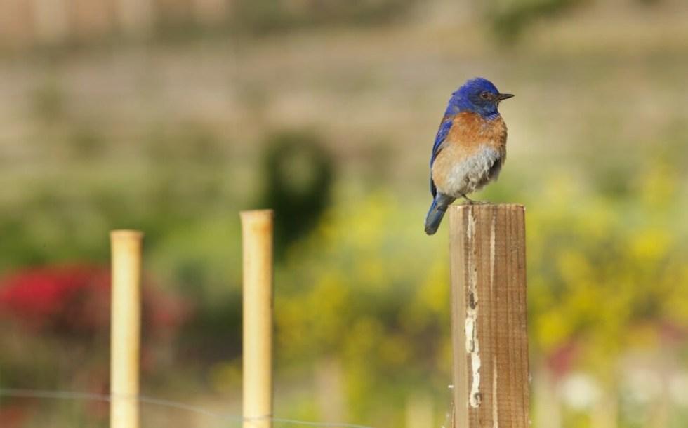 bluebird-1024x637