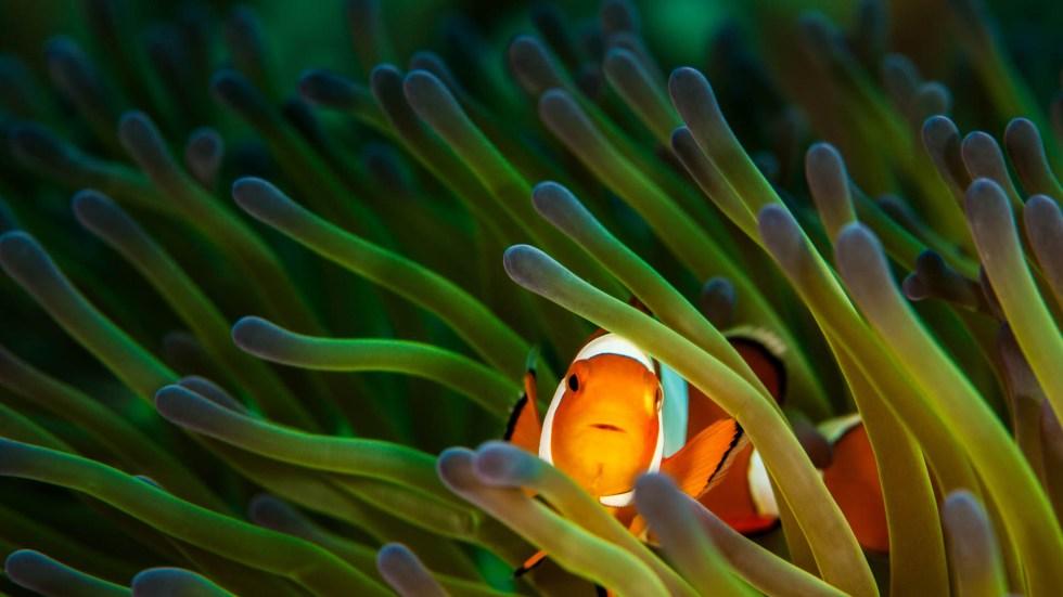 sea-anemone-adobe-stock