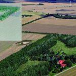 naturplant-skovrejsning10a%cc%8ar_skitse