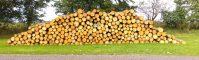 Krav ved afhentning af råtræ på skovveje