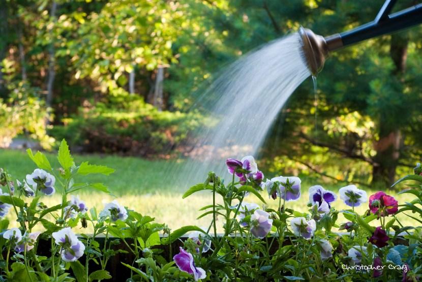 watering plants, gardening