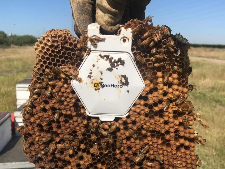 BeeHero smartens up hives to provide 'pollination as a service' with $4M seed round – ProWellTech