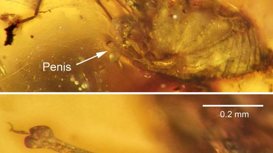 New species of cockroach-killing wasps discovered in 25-million-year-old amber