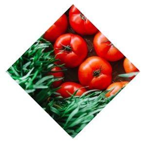 Tomate cœur de Bœuf Bio D'Alsace