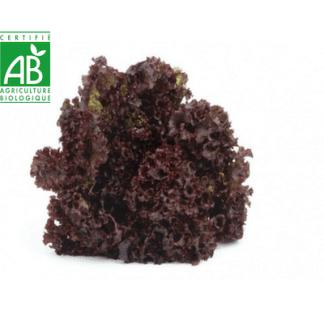 Salade alsacienne bio fraîche
