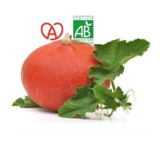 Potimarron bio made in Alsace