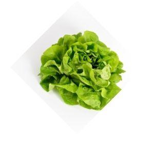 Salade Laitue Bio d'Alsace