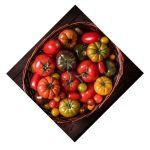 Tomate Bio d'Alsace