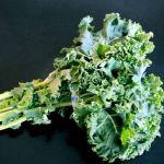 Décrire le chou Kale Bio
