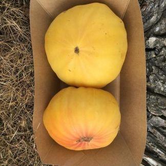 Tomates Ananas Bio d'Alsace