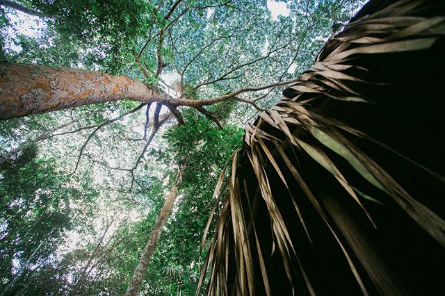 acampamento floresta amazonica