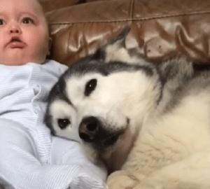 bebe-y-su-perro