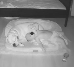 finn-brutus-dormir