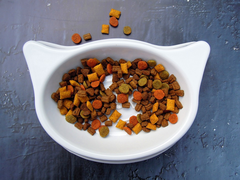 Alimentacio nou gat a casa