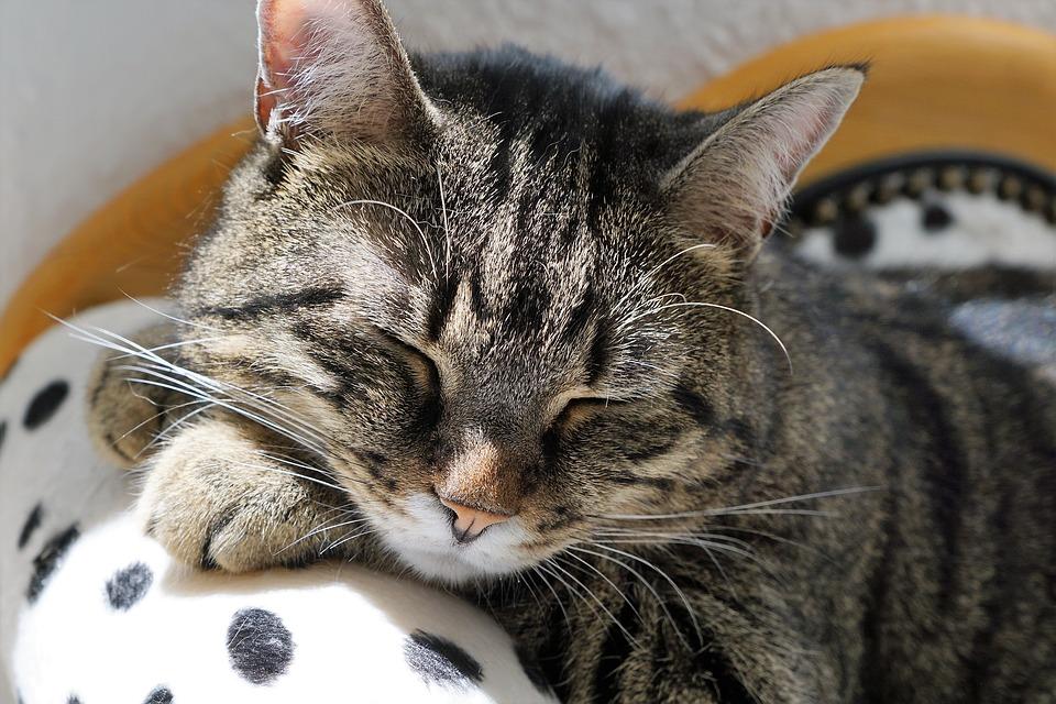 nou gat a casa dormint