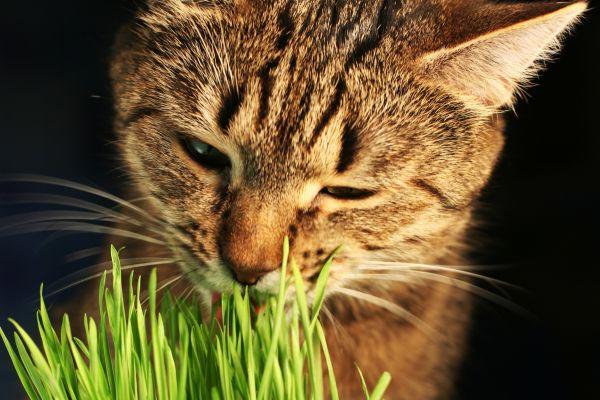 2. Els gats es purguen