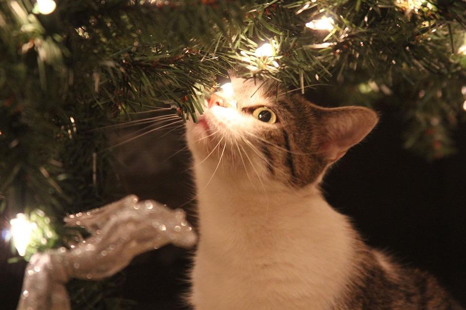Gat arbre de nadal