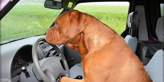 Transportins per gossos