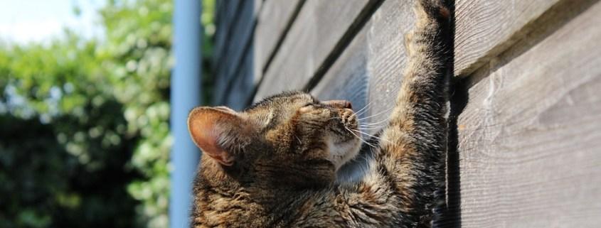 Rascadors per Gats