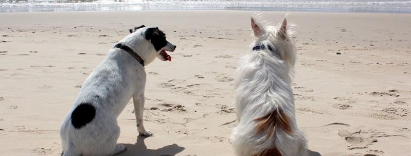Gossos a la Platja