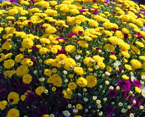 flors i plantes de temporada