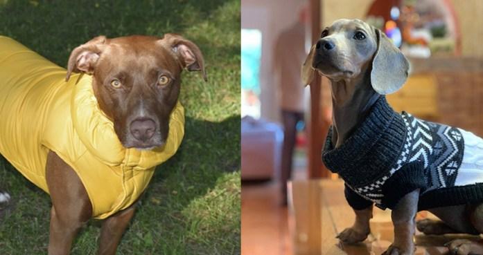 roba per a gossos