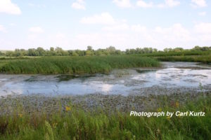 Reconstructed wetlands filter water, and convert unprofitable farmland into valuable wildlife habitat.