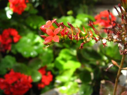 Kaj je najbolj pomembno pomladi ?  – 2.del