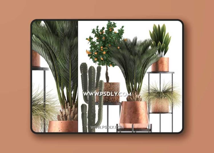 Plant Collection 288. Copper Cot
