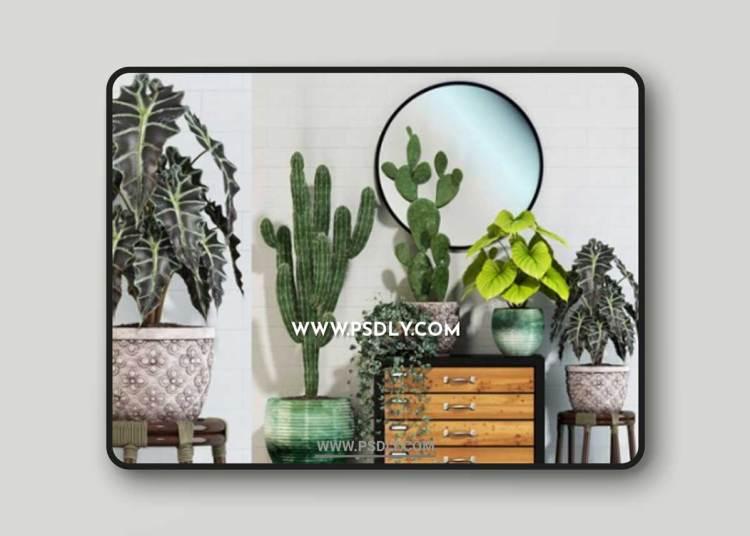 Plants collection 123 3D Models
