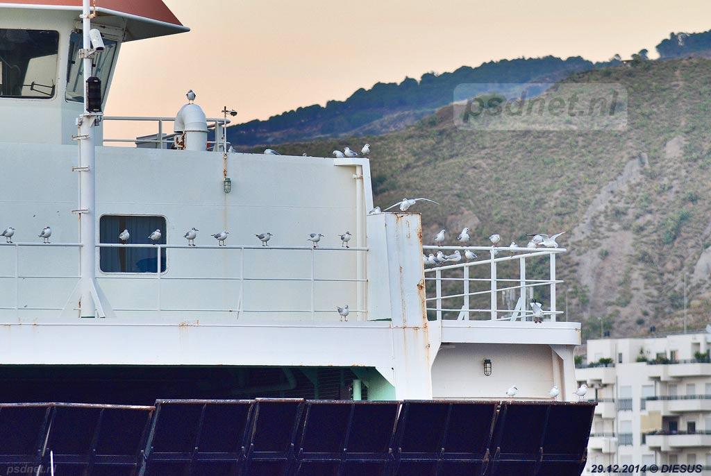 De voormalige PSD-veerboot Prinses Juliana (Amedeo Matacena) ligt er verlaten bij in de haven van Reggio di Calabria. De meeuwen lijken de aanwezigheid van de veerboot wel te waarderen.