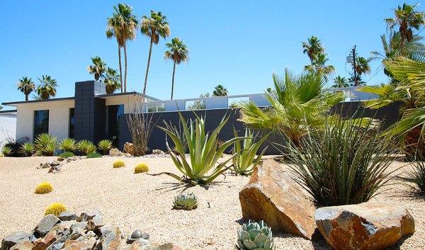 smart desert landscaping palm