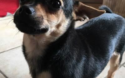 Pet Therapy Padova