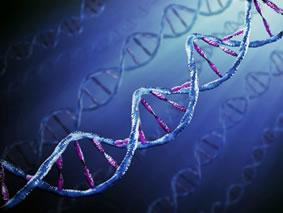 genetica e trauma.1