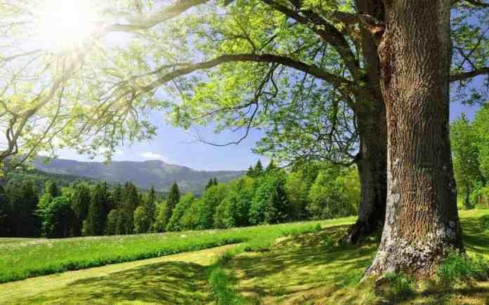 Priroda i dobar san