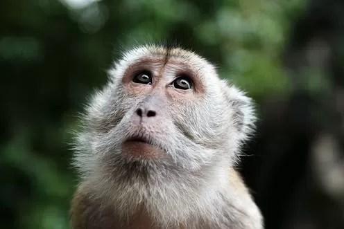 Evrim Hakkında Bilinen Beş Yanlış