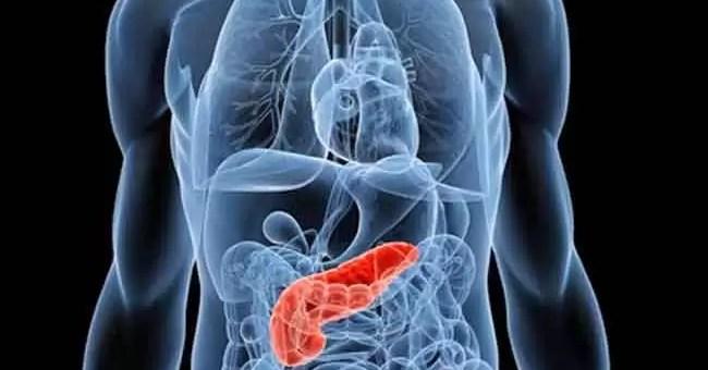 Pankreas Nedir? İşlevi, Yeri Ve Hastalıkları
