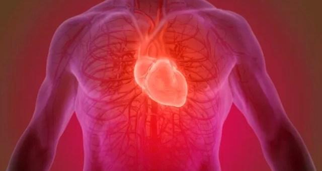 Kalp: İşlevi, Bölümleri ve Anatomisi
