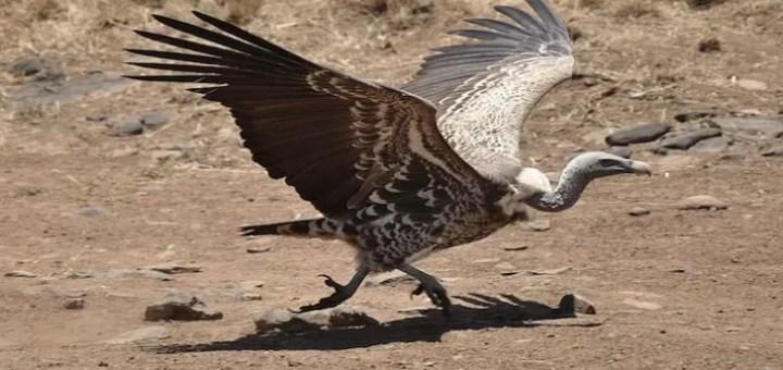 En Yüksekten Uçan Kuşlar Hangileridir?