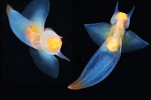 Deniz Meleği: Derin Okyanus Avcıları